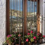 Plants in window pane in Spain